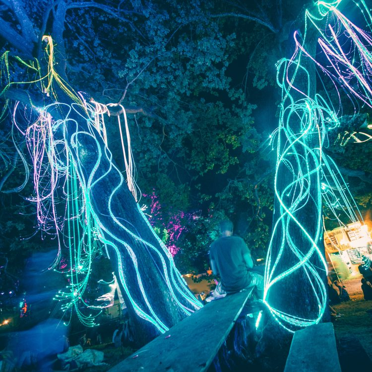 neon fairy lights hanging off tree at Noisily Festival 2018