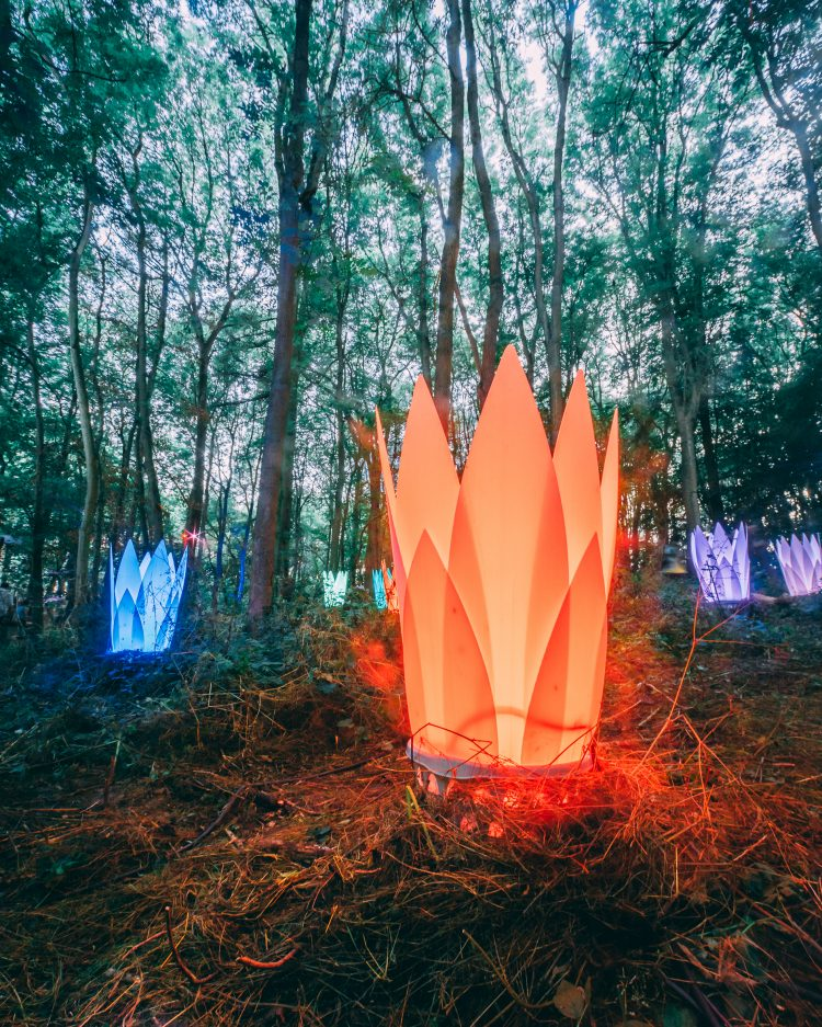 glowing art installation in the woods at Noisily Festival 2019